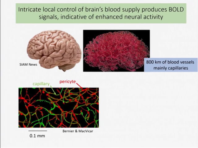 Embedded thumbnail for The Energetic Brain